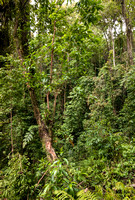Jungle on Tambora's lower slope