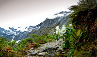 Milford Track: up Mackinnon Pass