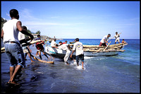Lamalera: East Indonesia Whaling Village